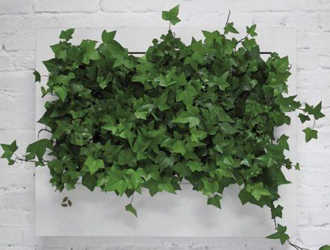 zielone ściany  do regeneracji powietrza