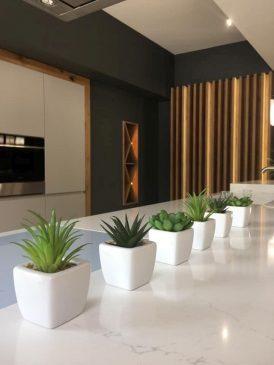 kuchnia i rośliny